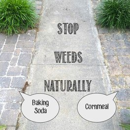 Stop weeds in your garden